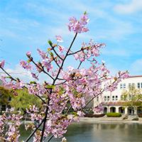関西 学院 大学 合格 発表 2021